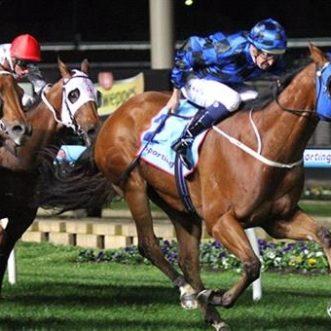 Manikato – Cavalo Favorito da Austrália